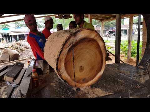Expensive Teak $300 Per CFT Wood Cutting by Small Sawmill/Teak Wood Cutting Ways