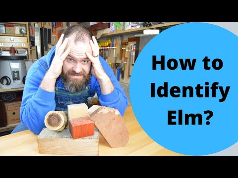 Wood Wecognition Wednesday: Elm