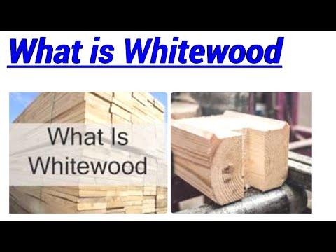 What is Whitewood | Types of Whitewood | Whitewood Tree